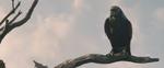 Maleficent-(2014)-1009