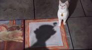 2004-cat-5