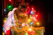 Gomer Christmas Special Tokyo