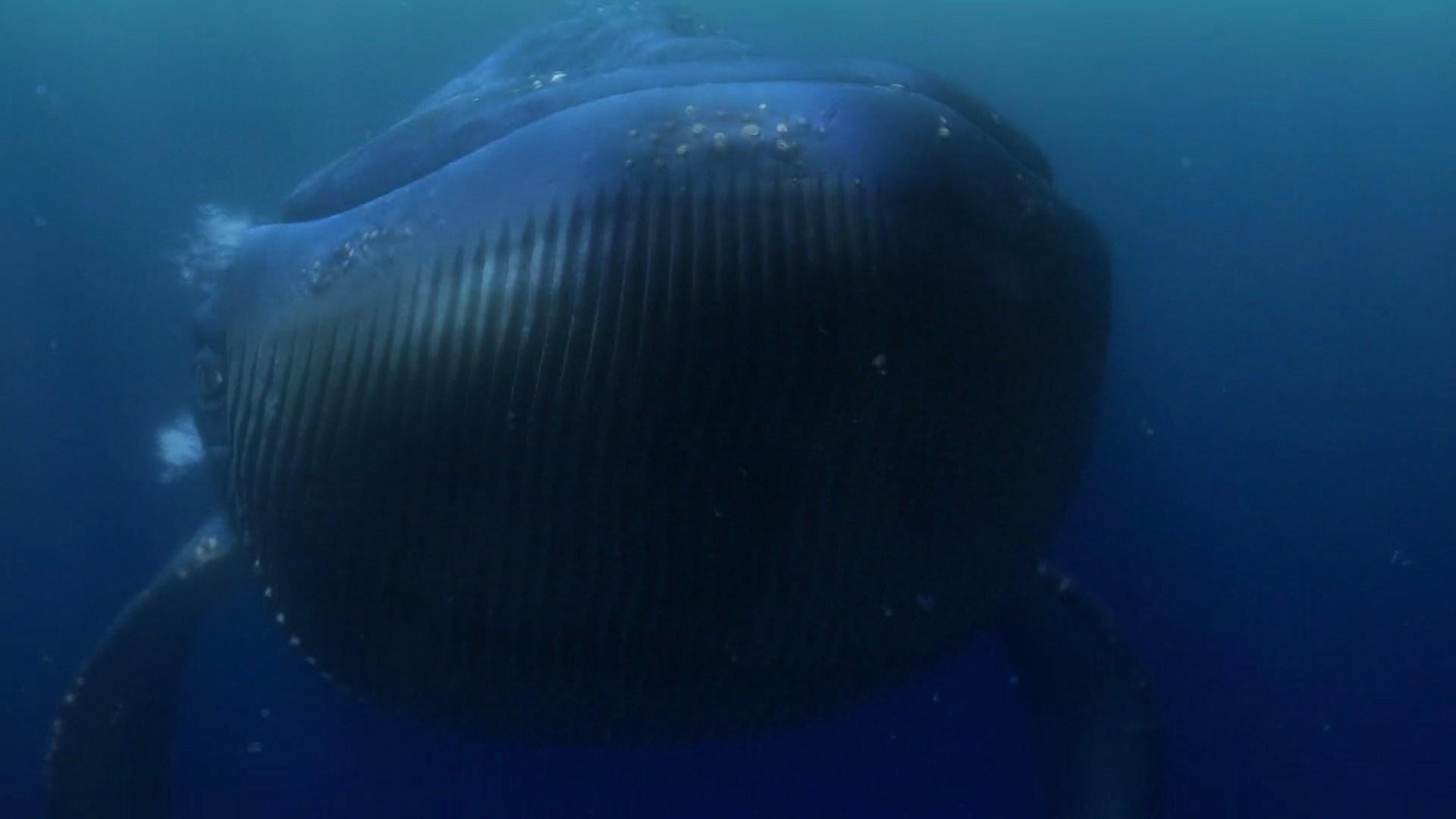 A Baleia (Procurando Nemo)