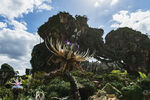 Pandora Landscape 13