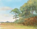 Woods 12