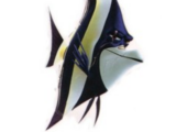Gill (Finding Nemo)