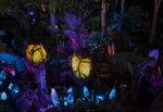 Pandora Landscape 10