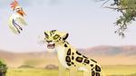 The-golden-zebra (53)