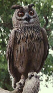 Owl-LiveAction