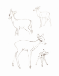 Bambi sketchbook 044