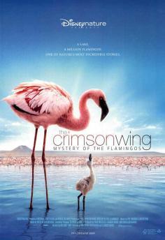 Balé Vermelho: O Mistério dos Flamingos