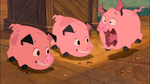 Piggies Burping