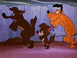 1950-coyotes-2