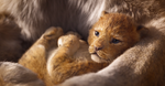 Baby Simba from Remake 1