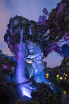 Pandora Landscape 14