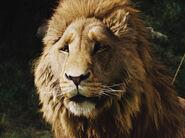 Aslan Headshot