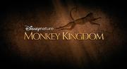 68 monkey kingdom