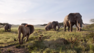 Mufasa walking with simba near elephants 2019