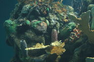 Coral reef at Epcot