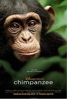 Chimpanzee poster.jpg