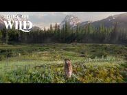 The Call of the Wild - Answer The Call Clip - 20th Century Studios