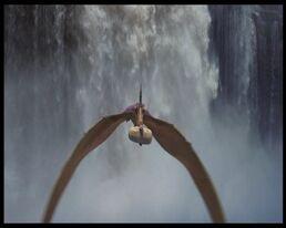 Pteranodonte di Dinosauri.jpg