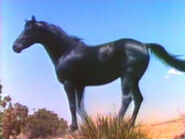 1958-slaughter-07B
