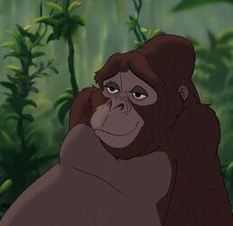 Kala Tarzan.jpg