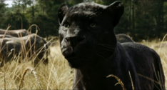 The Jungle Book 2016 (film) 22.png