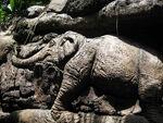 ToL Elephant