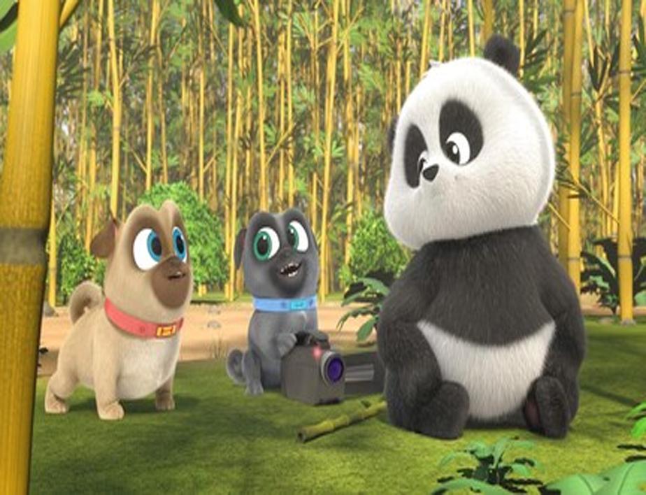 Puppies and Pandas