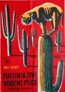 Living desert yugoslavian poster