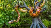 MK Jungle Cruise Snake