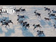 The Call of the Wild - Sounds of the Wild - 20th Century Studios