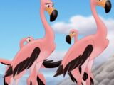 Flamingo Girls