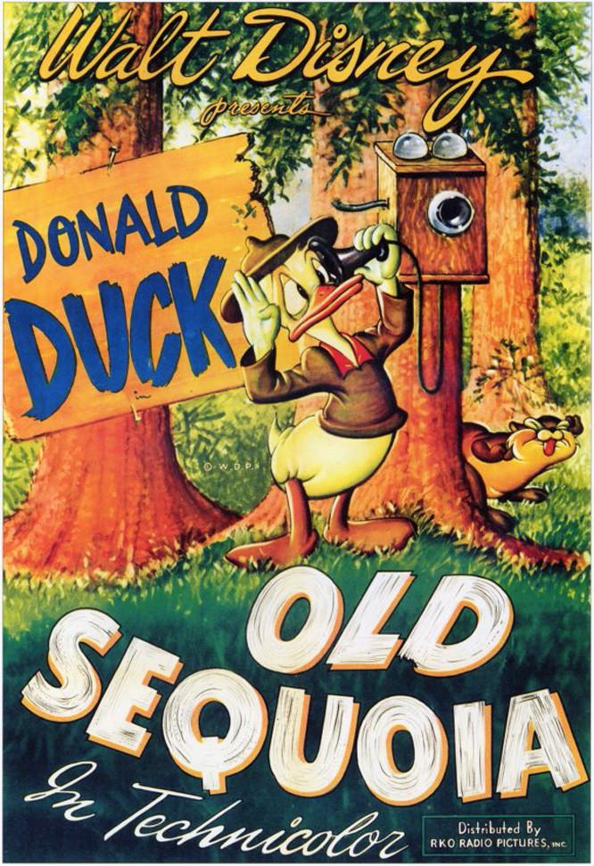 Old Sequoia