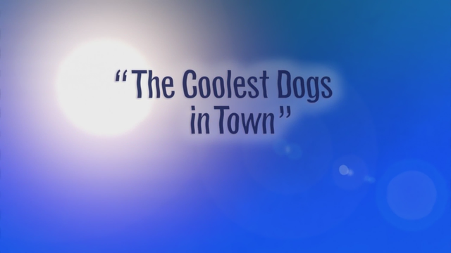 The Coolest Dogs in Town