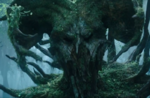 Tree Soldier Headshot