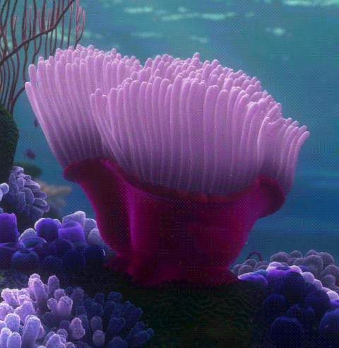 La Anémona (Finding Nemo)