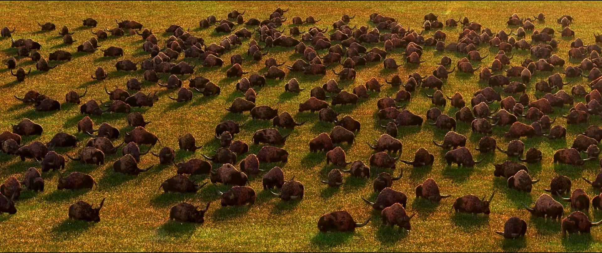 Longhorn Bison