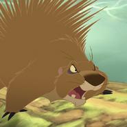 Porcupine - Raafat