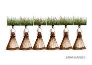Taymor-sketch-grasshead