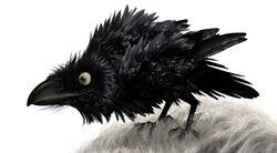 Brave the crow.jpg