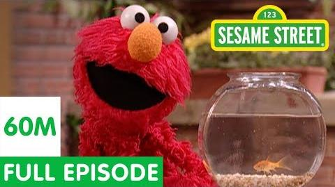 Elmo and Friends Find the Best Pet Sesame Street Full Episode