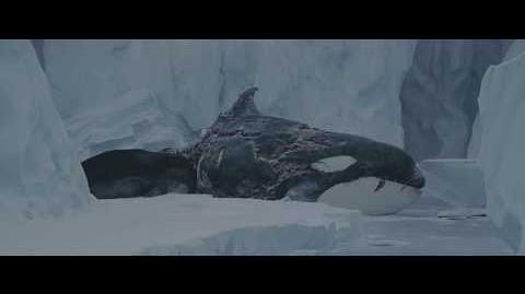Seal Scene from eight below