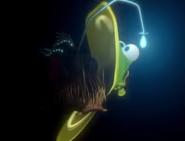AnglerfishDeath