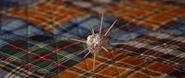 Spiky Tinfoil Ball