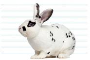 Frisky(rabbit)