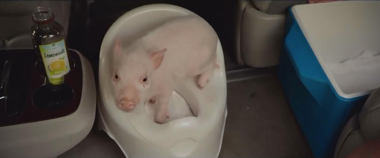 Juliana Pig