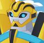 Bumblebee TRB