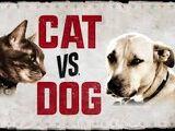 Entre perros y gatos