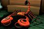 Scorpion 2 1178