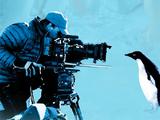 Pingüinos: Vivir al límite